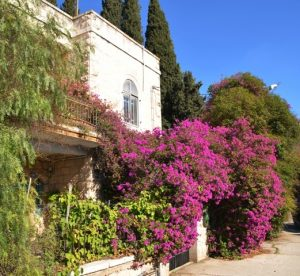 Flowers Jerusalem