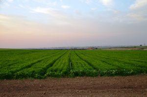 field near GAza