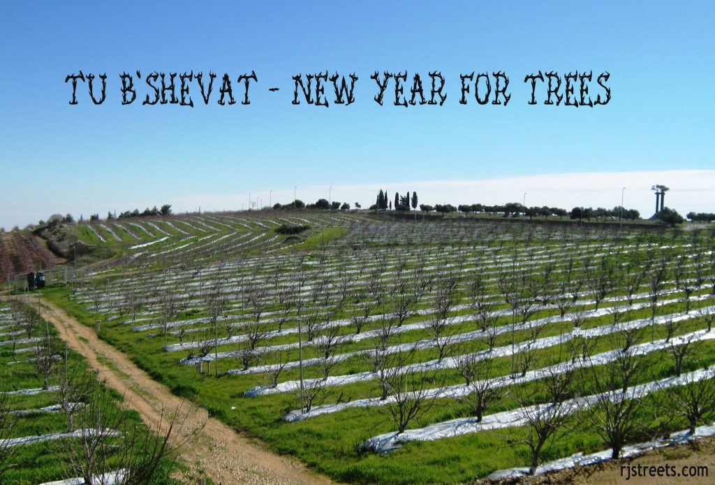 image Israel tu beshvat, photo for Tu Bshvat , picture trees planted