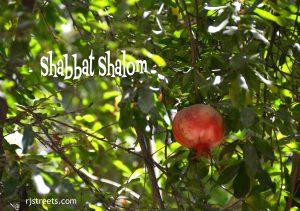 rimon shabbos