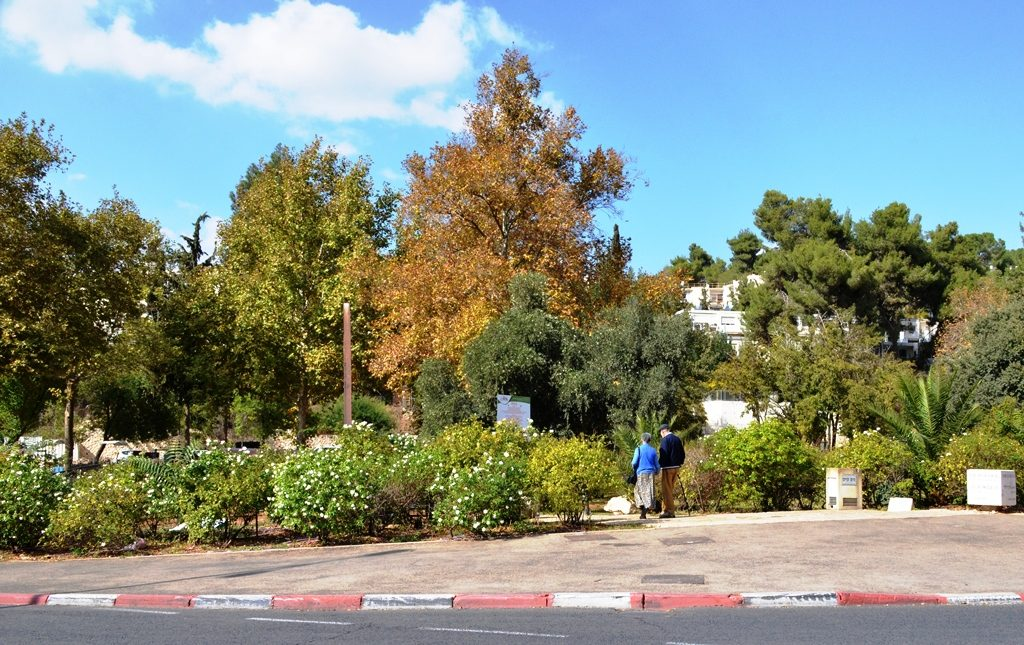 Jerusalem Israel winter scene at park with white flowers blooming
