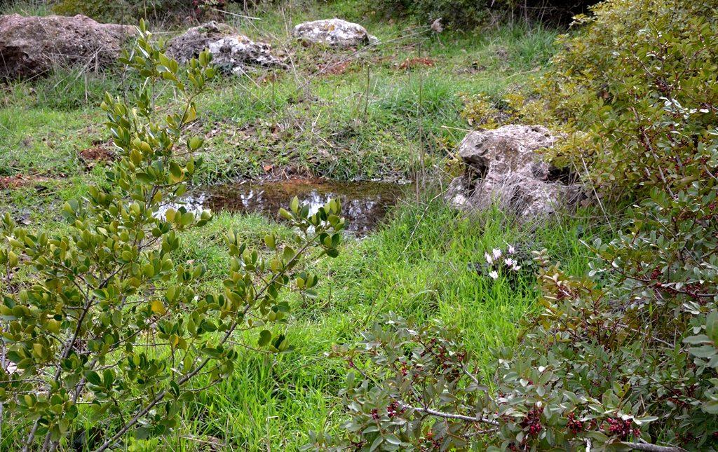Valley of Cross turns green after heavy rains Israel Jerusalem
