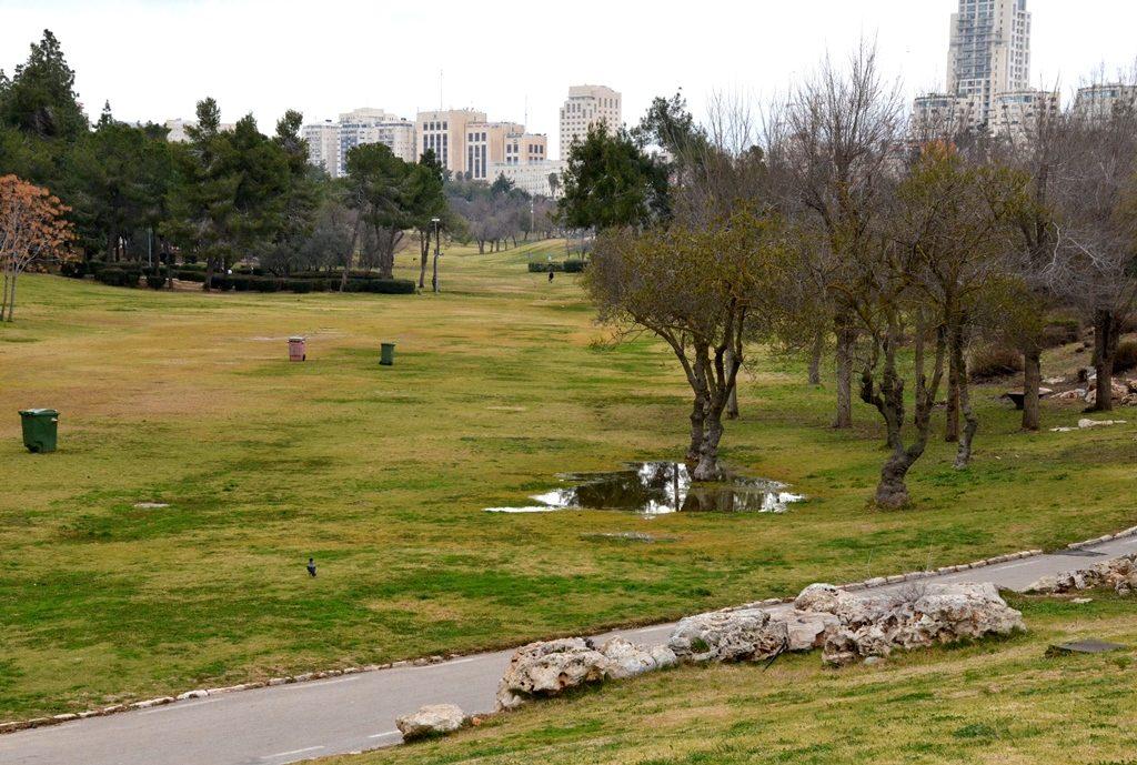 After heavy rain Gan Sacher has puddles and grass turning green Jerusalem Israel park