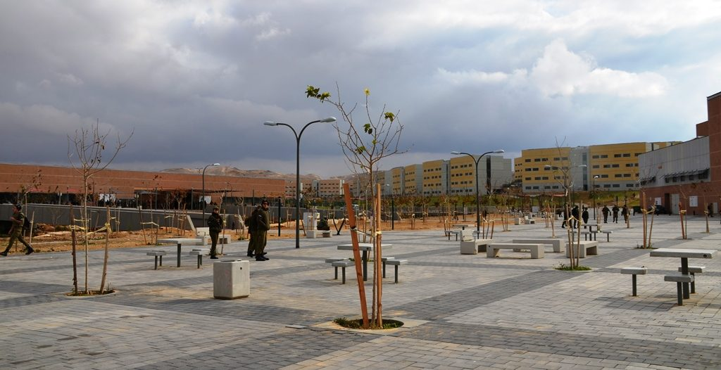 New planted tress in army base in Negev