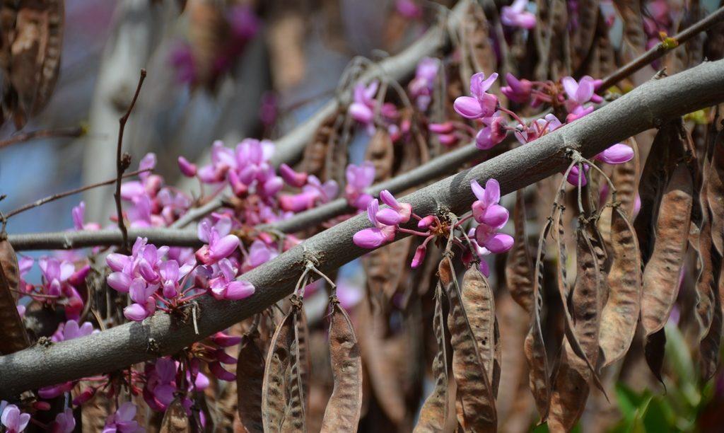 Spring blossoms Jerusalem Israel