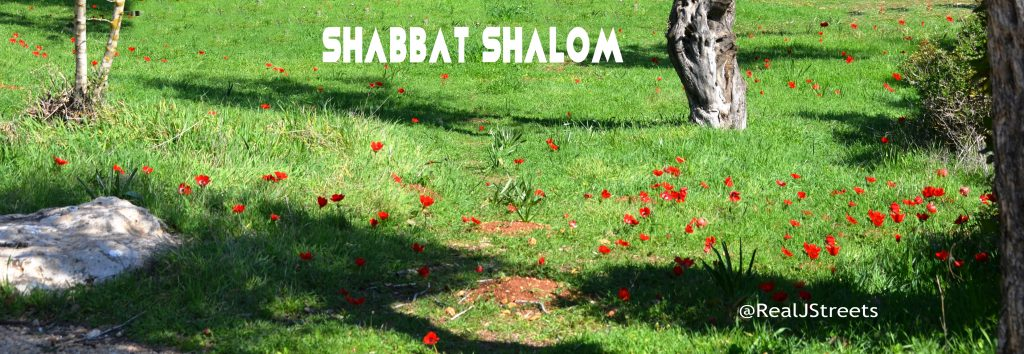 anemones, poppies, flowers Shabat shalom poster