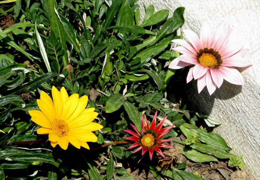Jerusalem Israel spring flowers Shabat shalom