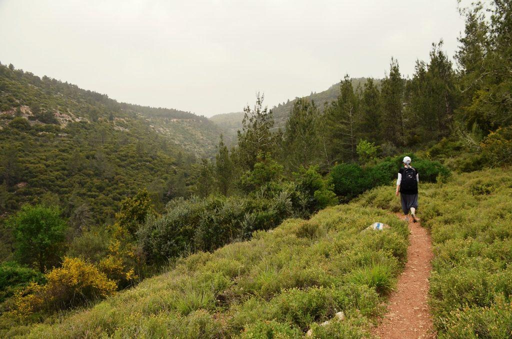 Nature trail Israel Nahal Katlav