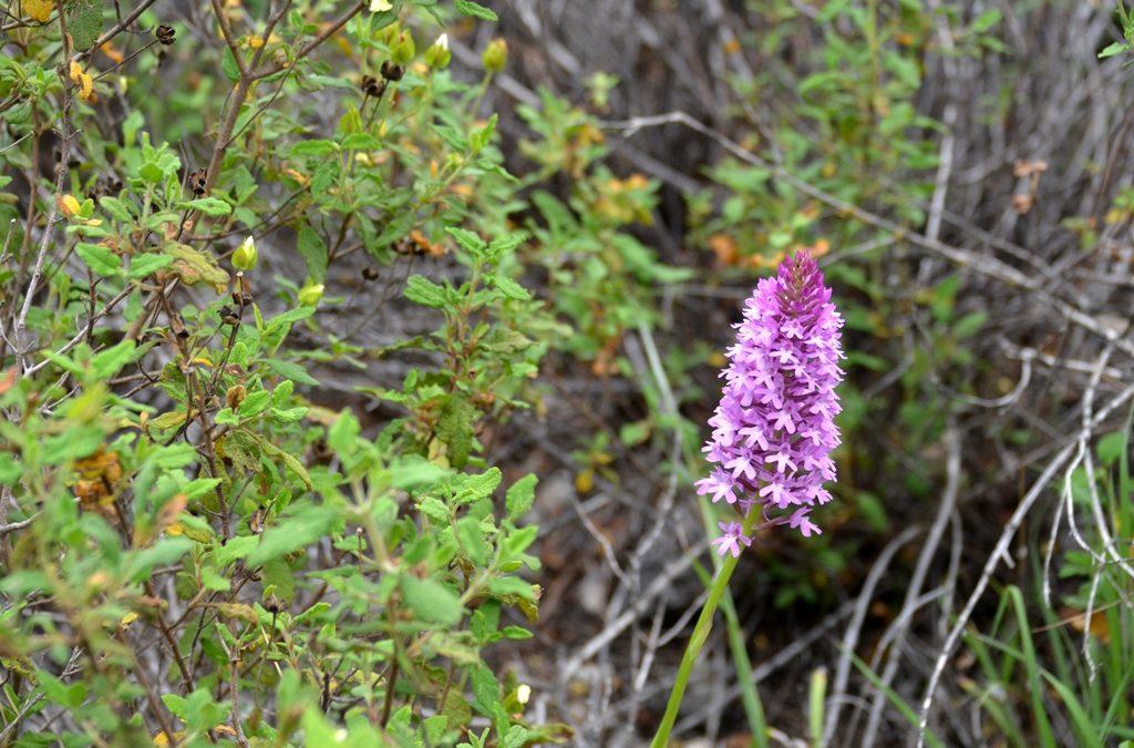 Wild flowers blooming in Judean Hills