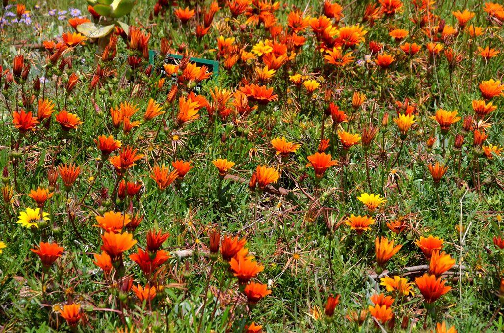 Flowers, Botanical gardens Jerusalem