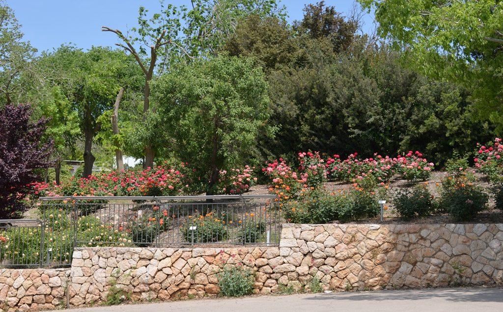 Rose Garden Jerusalem