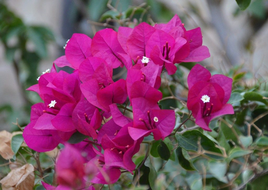 Yemin Moshe Jerusalem Israel flowers