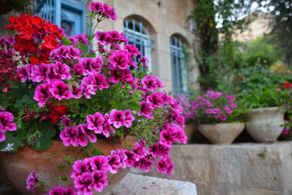 Flowers in Yemin Moshe Jerusalem Israel