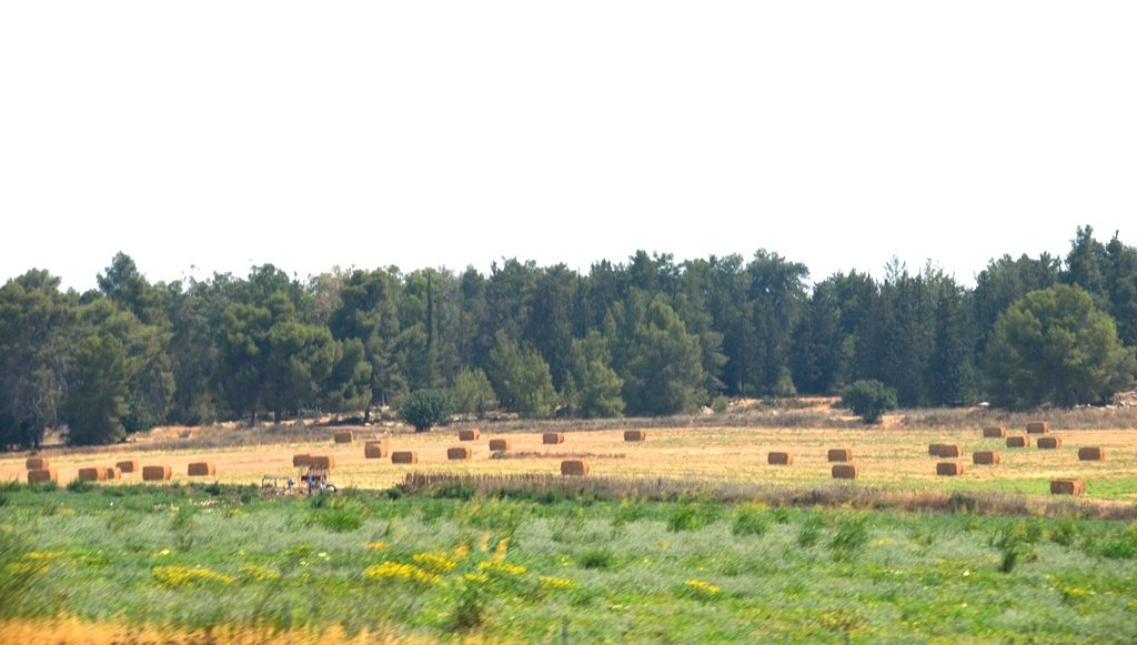 Israeli countryside bales of hay