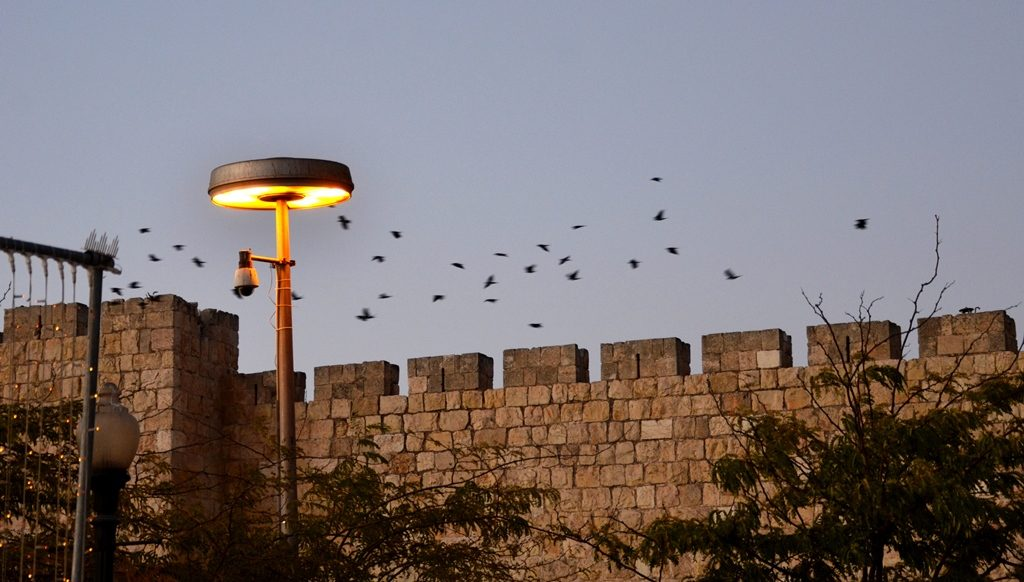 Jerusalem migrating birds