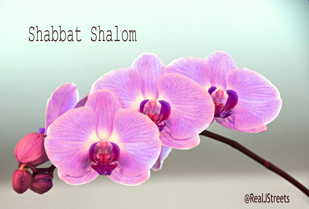 Flowers for Shabbat shalom sign