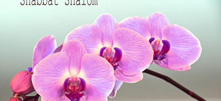 Shabbat Shalom – Unity