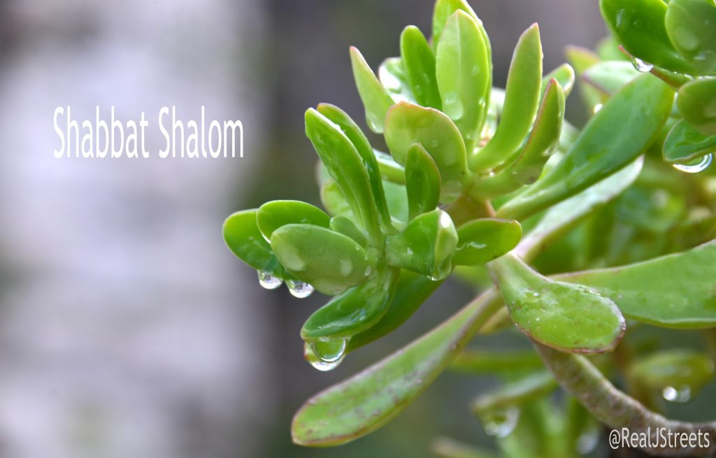 Leaves with raindrops, Shabbat shalom sign