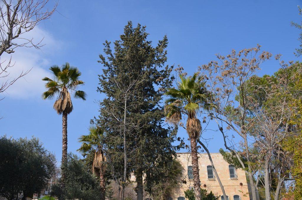 Yemin Moshe trees Jerusalem Israel