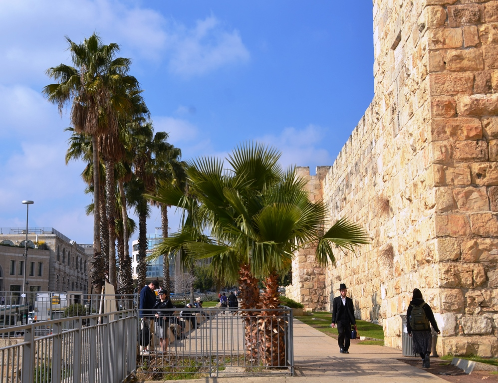 Jerusalem Old City from Jaffa Gate to Kikar Safra protected tree