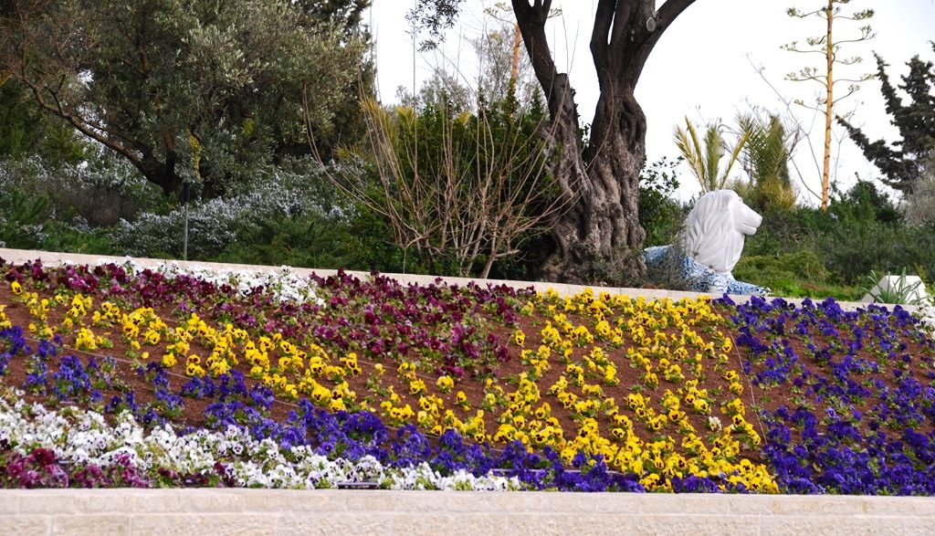 Flowers planted near Jerusalem Windmill in Israeli park
