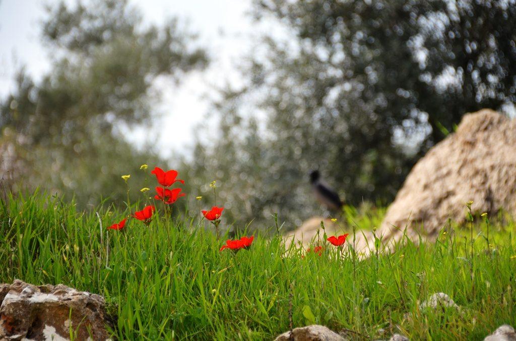 Valley of Cross Jerusalem Israel in spring.