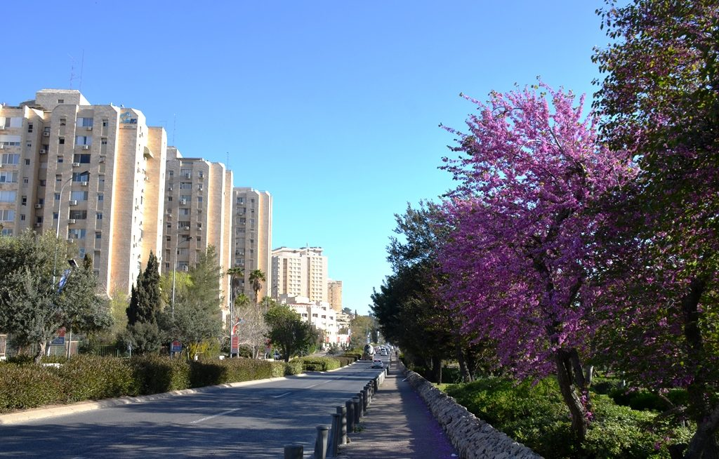 Gan Sacher trees in bloom on spring day with blue sky