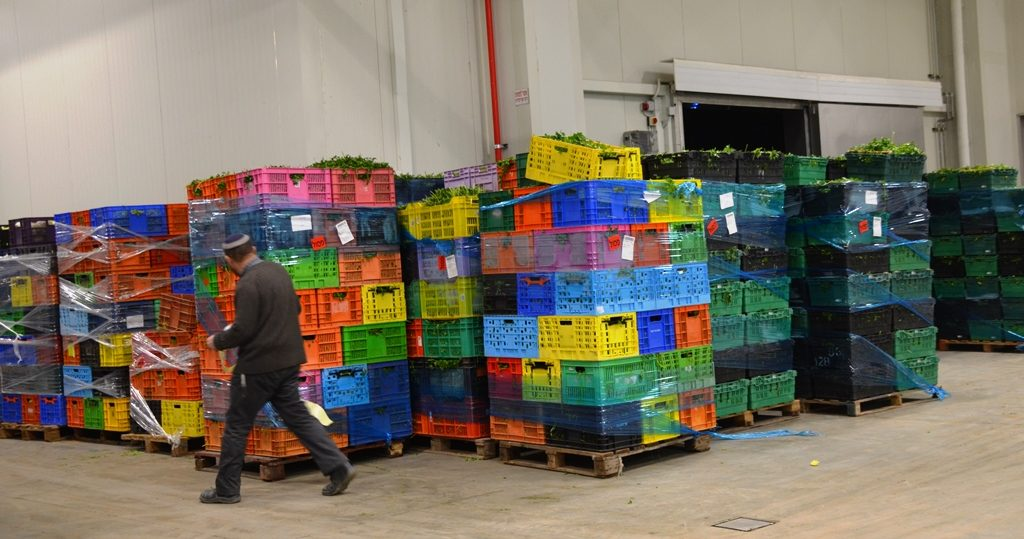 Vegetables marked with red stickers were rejected by packing plant for kosher customers