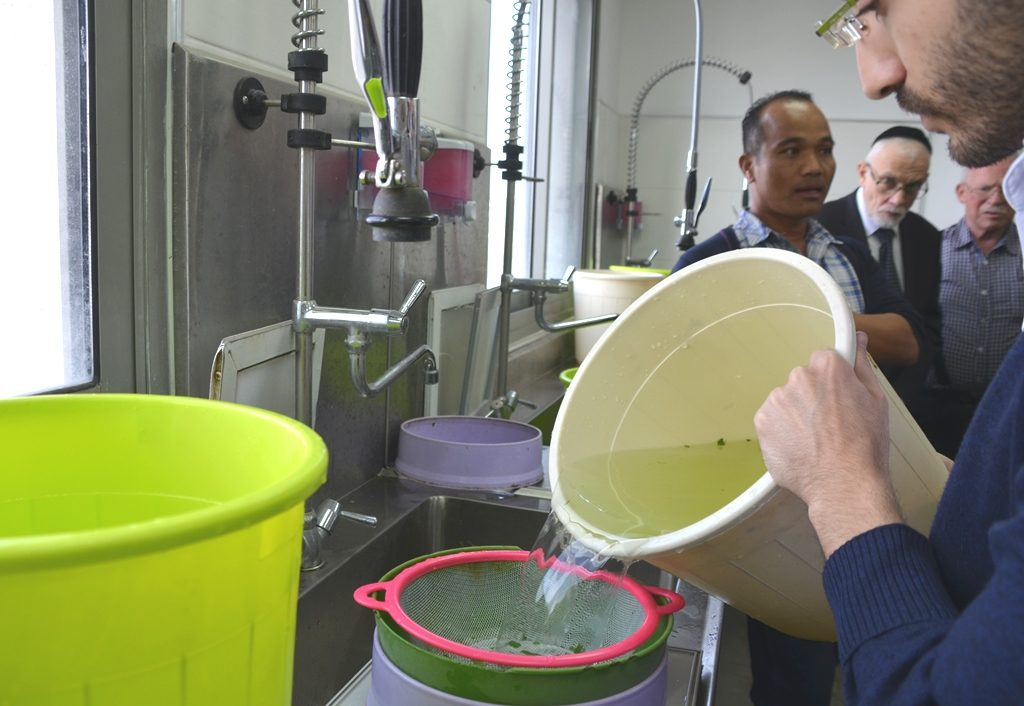 Gush Katif packing plant water being checked for insects