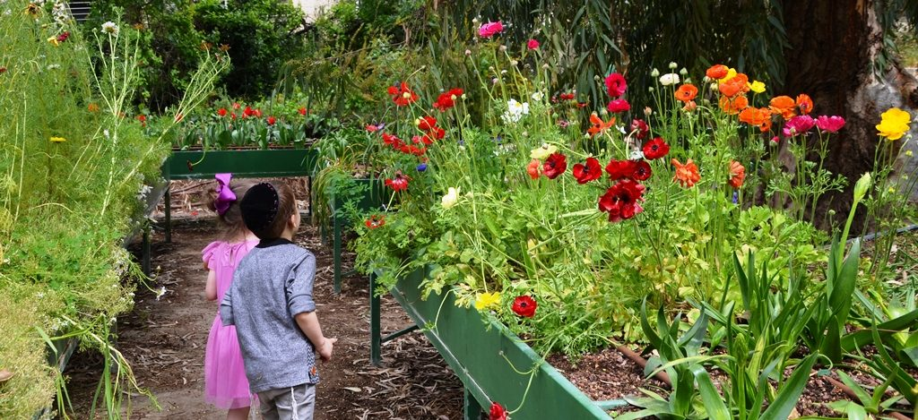 Boy and girl looking at flowers in Jerusalem Botanical Gardens