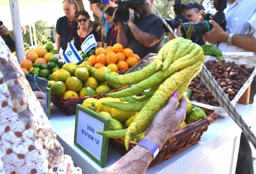 Etrog irregular shape at Beit Hanasi for sukkot