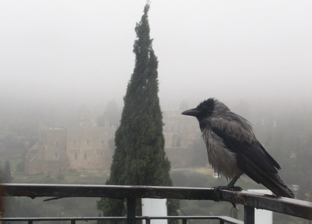 Fog in Jerusalem Israel so thick to obstruct view of Monastery, bird perched outside window.