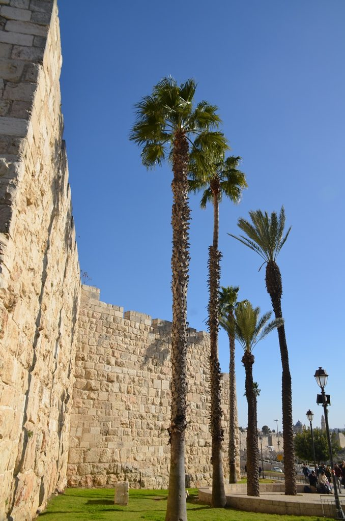 Old City Jerusalem Israel walls tall palm trees
