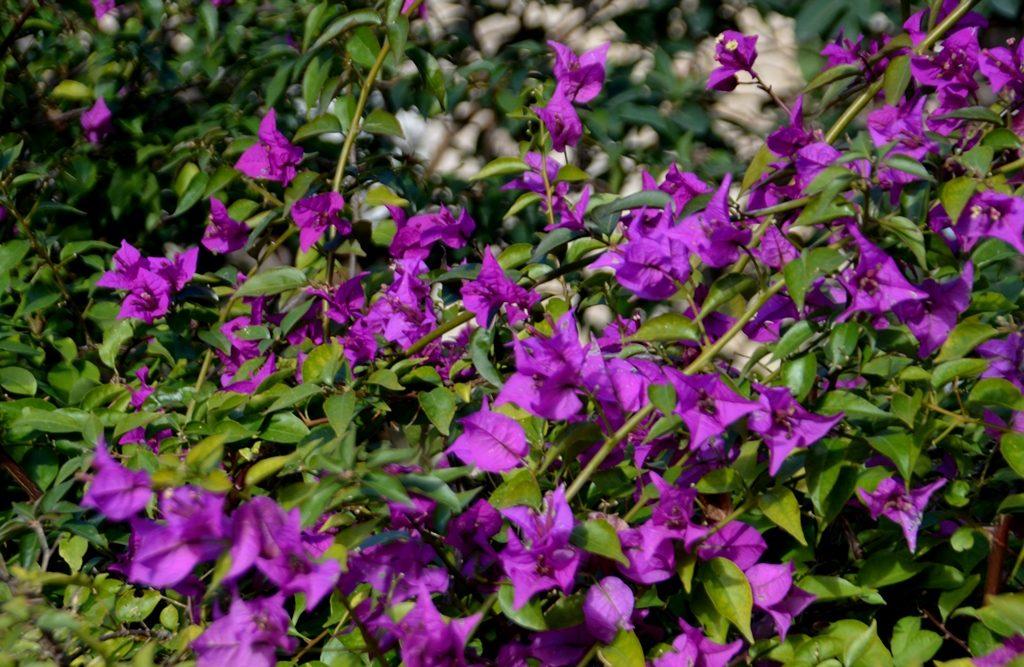 Jerusalem Israel flowers