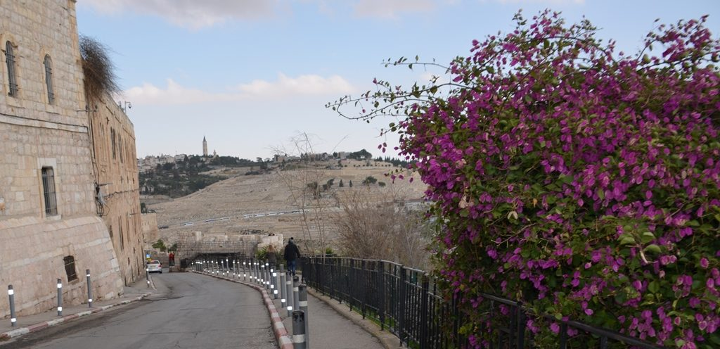 Mount of Olives Cemetery from Old City near Zion Gate