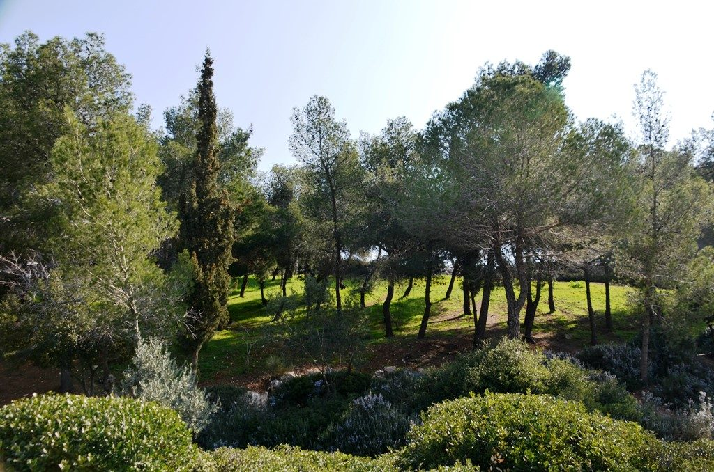 Rechavia view of green and trees Jerusalem Israel