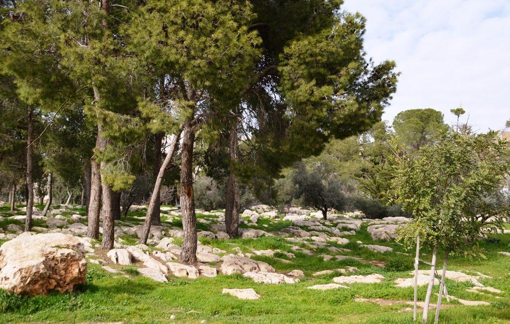 Jerusalem park green in winter
