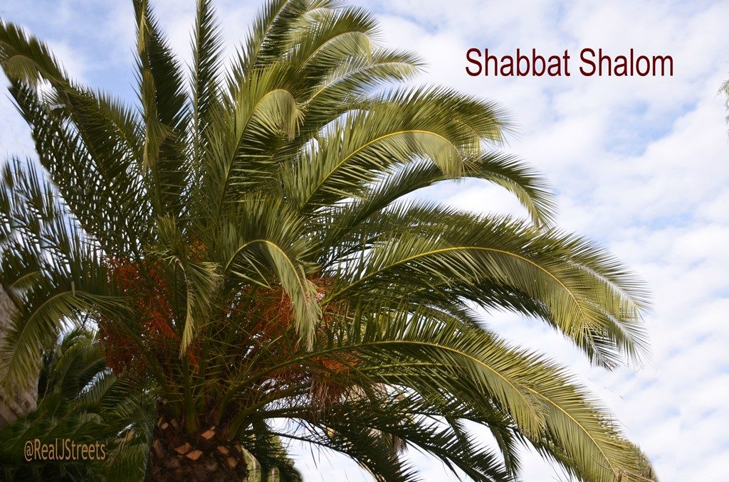 Jerusalem Israel palm tree for Shabat shalom