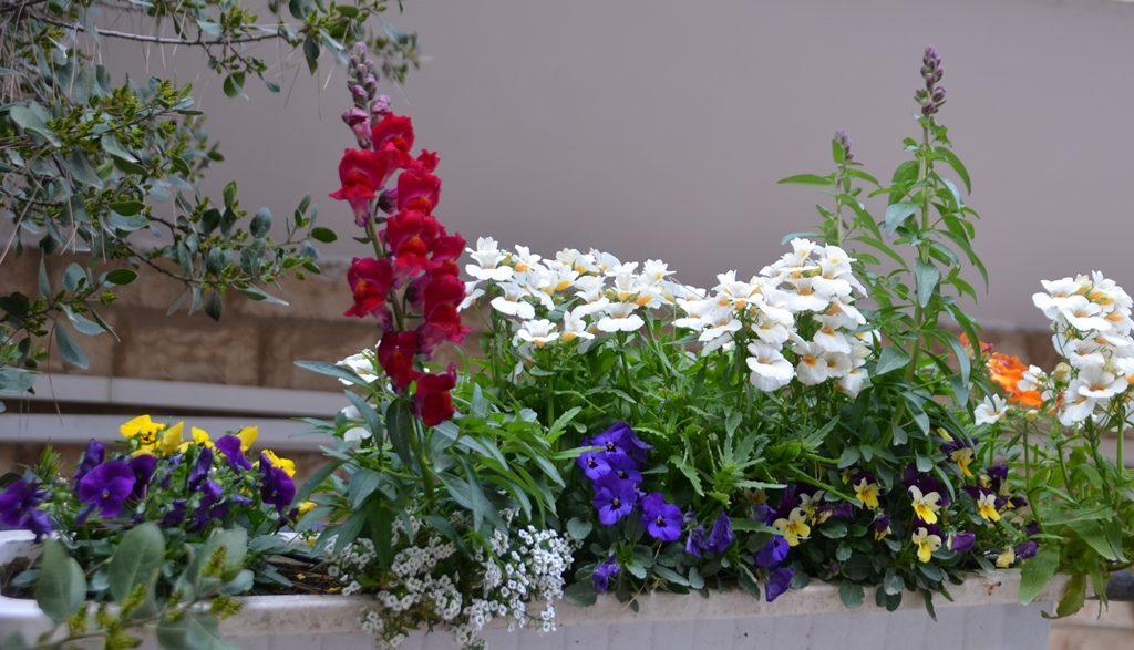 flower box in winter in Jerusalem