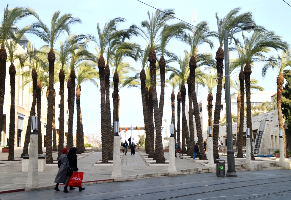 Palm trees at Kikar Safra removed because of disease after one fell
