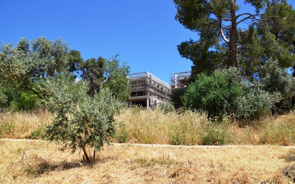 Jerusalem Park dry grass