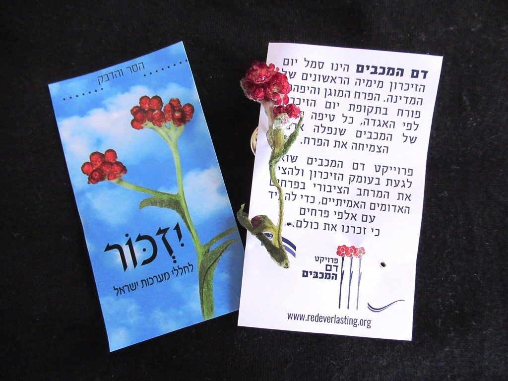Pin for Yom HaZikaron with Red Everlasting flower Dam Hamaccabim flower