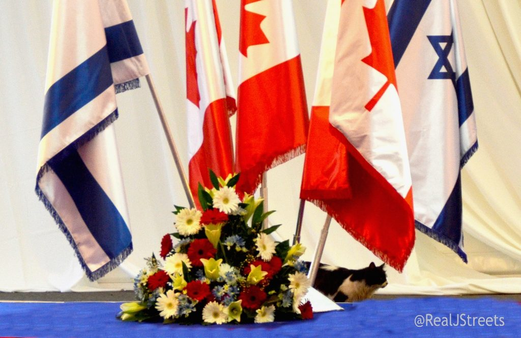 Cat under Israeli and Canadian flags for Prime Minister Stephen Harper visit