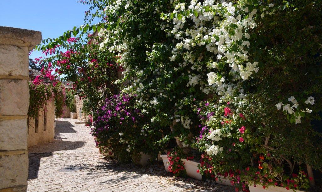 Yemin Moshe fall flowers