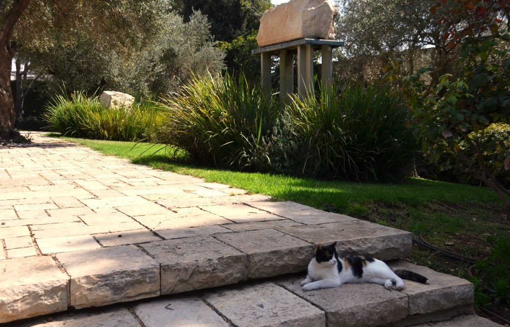 Israeli Presidential cat in garden at Beit Hanasi