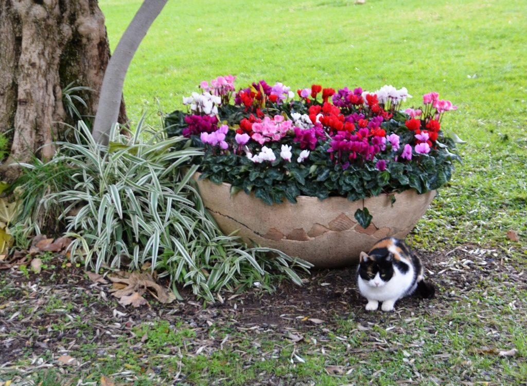 Israeli president cat in Beit Hanasi garden