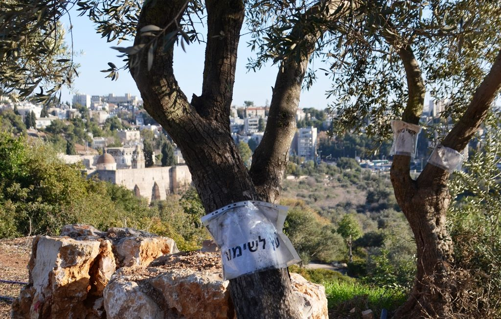 Jerusalem Israel tree preservation