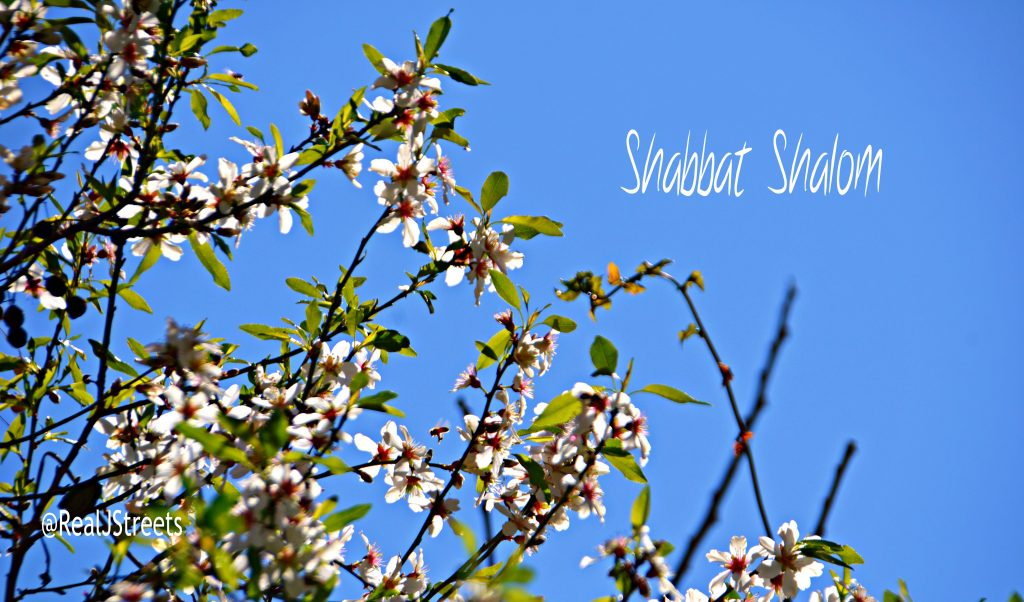 Shabbat shalom from Jerusalem with almond blossoms.