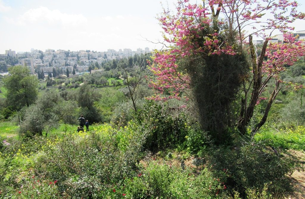 Valley of Cross park in Jerusalem in spring