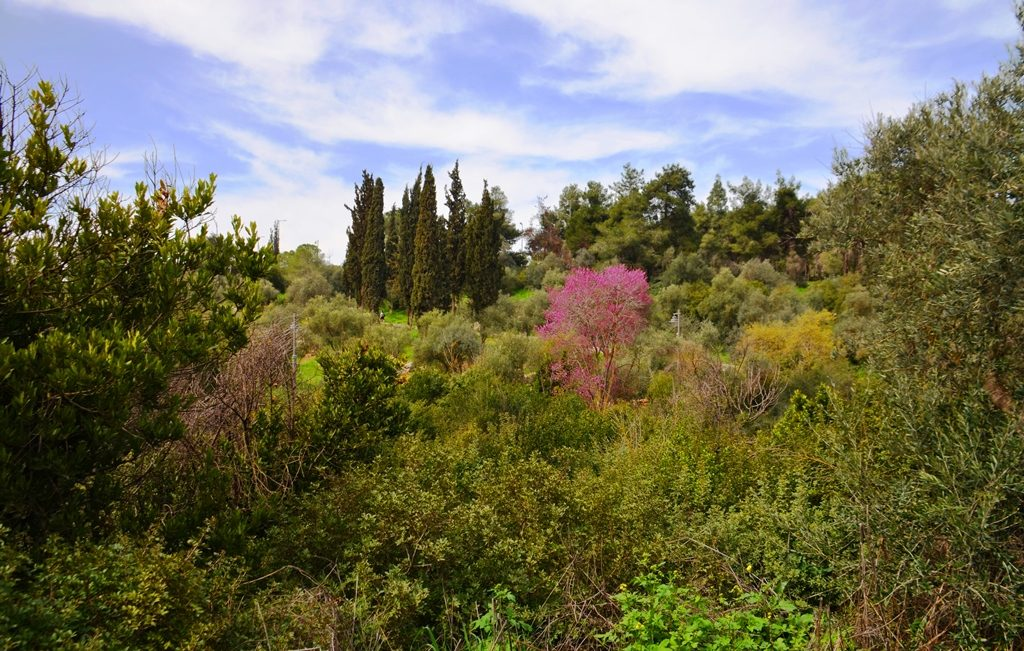 Valley of the Cross in Jerusalem on a spring day